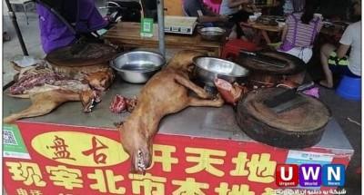 عودة مهرجان الكلاب المسلوخة في الصين
