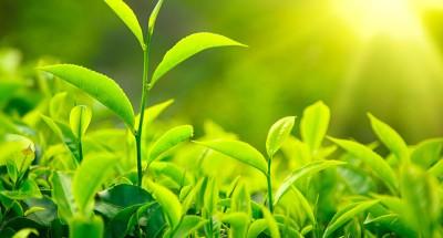 أخبار مصر | «الزراعة» تعلن حصاد معهد بحوث أمراض النباتات خلال أغسطس الماضي
