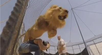 أسد يهاجم «الفيشاوي» أثناء التصوير