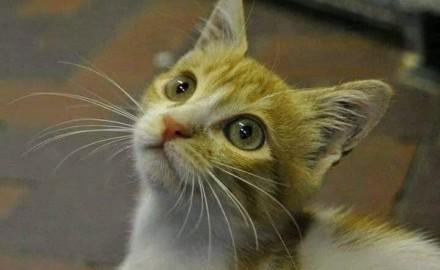 ربع حظها.. قطة مصرية تصل إنجلترا عبر قمامة المطار